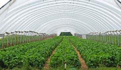温室建设中经常存在的问题有哪些?