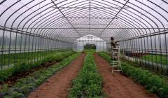 温室种植时,关于温室温度的降低有什么技巧?